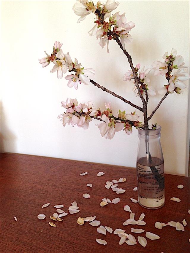 16.08.19_blossoms